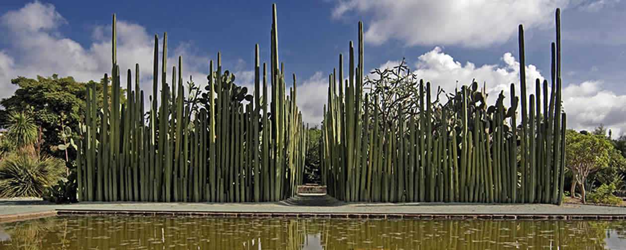 Museum of Cultures of Oaxaca and the Ethnobotanical Garden